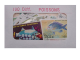 Poissons 100 Diff.